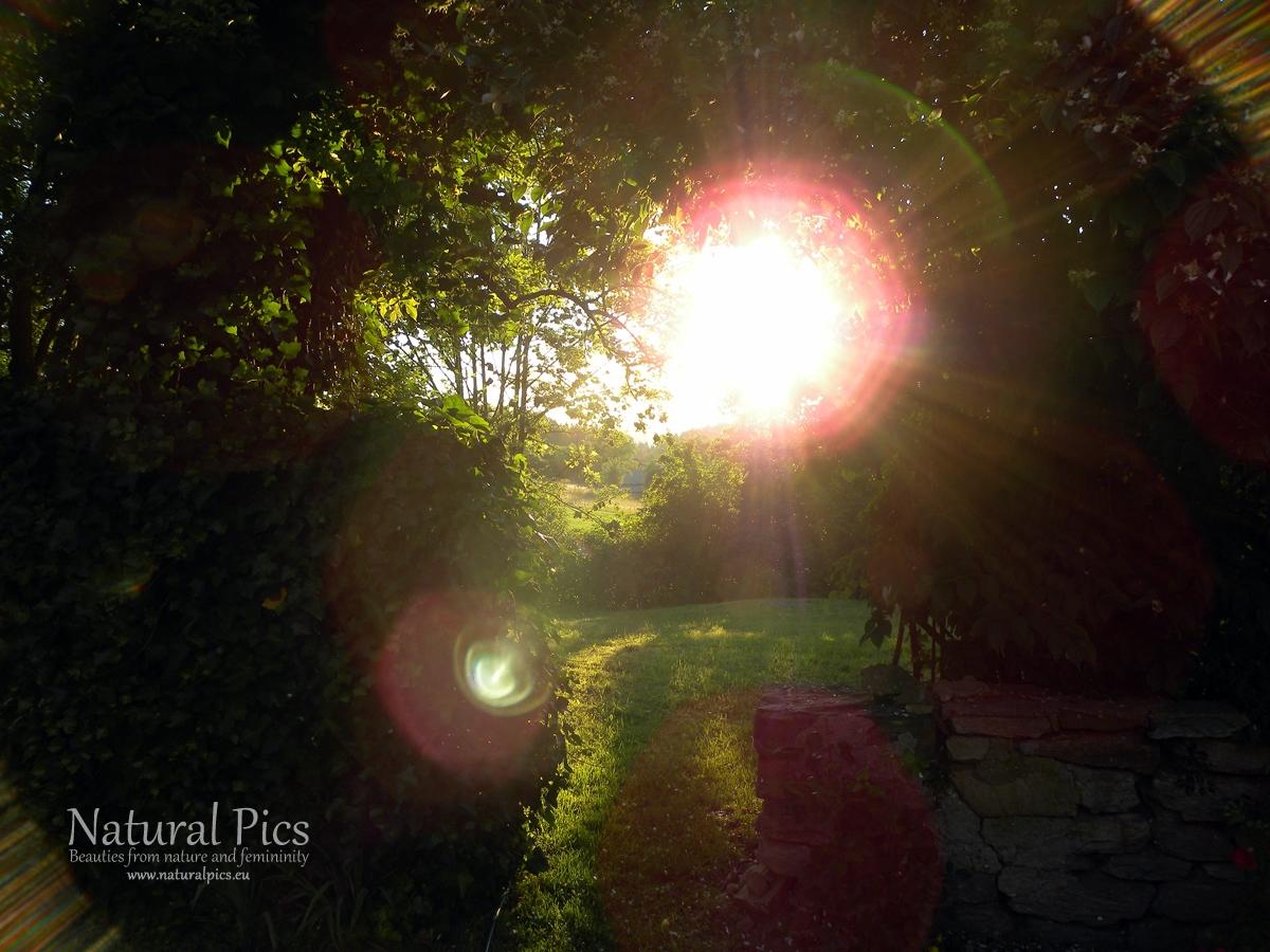 Gegenlicht im Garten