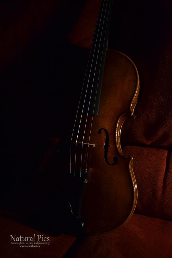Geige II