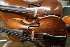 violins in Venice