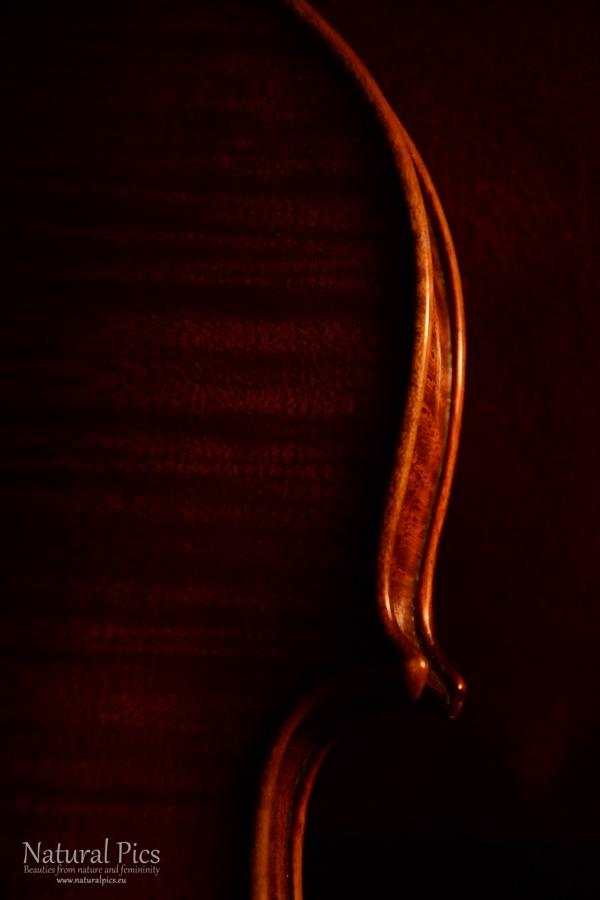 violin_(10)