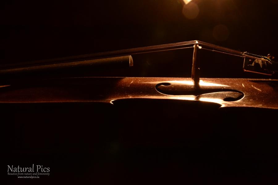 violin_(4)