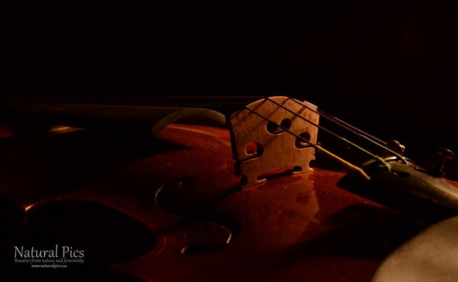 violin_(5)