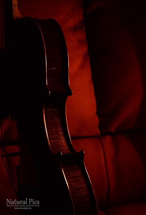 violin_(8)